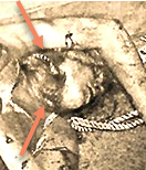 Corpse cropped with arrows