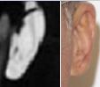 Holly Katz ears