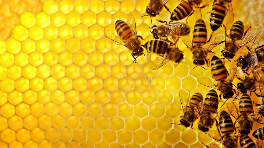 Bees die, wedie